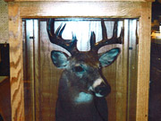 Taxidermy Mounts in Custom Cabinets - Great Bear Taxidermy