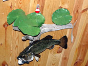 Fish Mount - Great Bear Taxidermy
