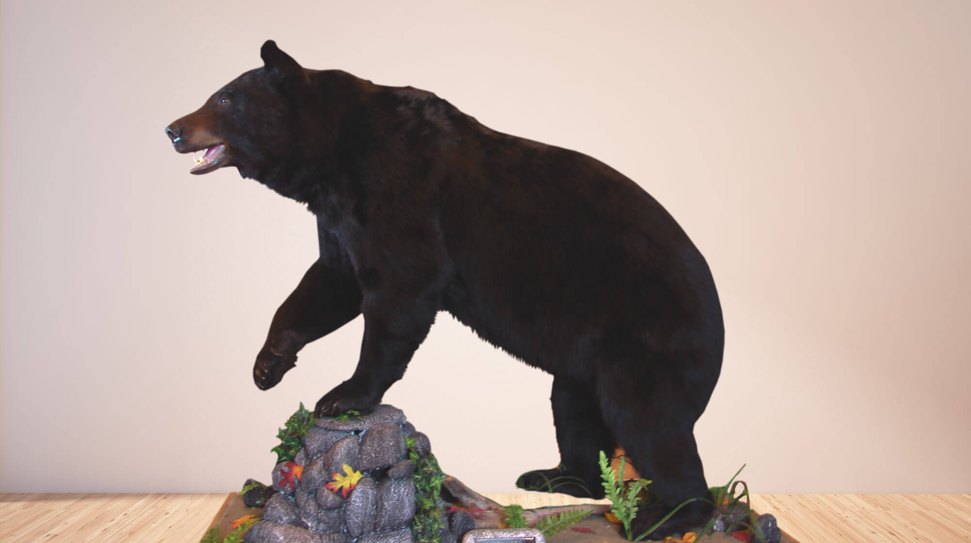 Life size mount of a black bear